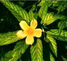 Escozor, Picazón y Piel irritada e inflamada: prueba estas Plantas Medicinales