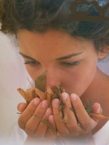 Bergamota: Propiedades medicinales y terapéuticas