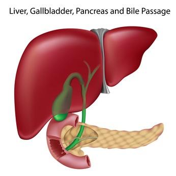 Limpiar el hígado con Plantas Medicinales