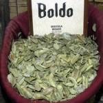 Boldo: propiedades y usos terapéuticos y medicinales
