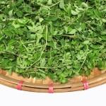 Moringa: Desnutrición, Diabetes, complemento nutricional, Anorexia, etc