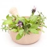 Repeler mosquitos y otros insectos con Plantas decorativas y Aromáticas