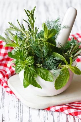 Plantaas Decorativas y Aromáticas