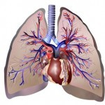Ma Xing Er San Tang para el tratamiento del cor pulmonale en fase inicial aguda