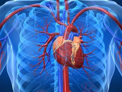 Efecto de Qi Shen Yi Qi Di Wan sobre lesión del miocardio y la función microcirculatoria edad cardíaca coronaria