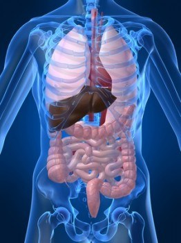 Tratamiento clínico de la miastenia gravis con deficiencia de Bazo y Riñón