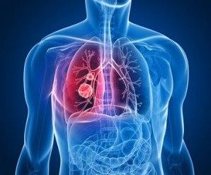 Pulmones. Sistema respiratorio