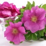 Propiedades Medicinales de la Rosa China, en Medicina Tradicional China