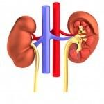 Enfermedades Renales: Remedios con Plantas Medicinales
