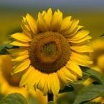 Flores Que también son Beneficiosas