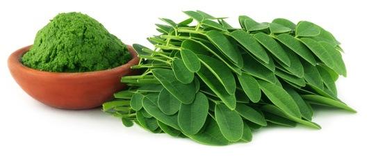 Moringa, Descubre los Beneficios del Maravilloso Árbol