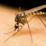 Virus de Zika, Plantas Útiles
