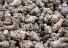 Notoginseng: Panax pseudoginseng Wall. Usos medicinales